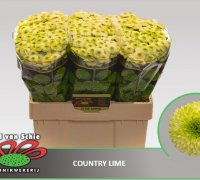 country-lime-4
