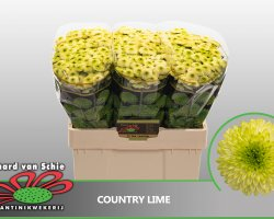 Country Lime-6