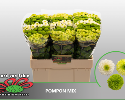 Pompon Mix green